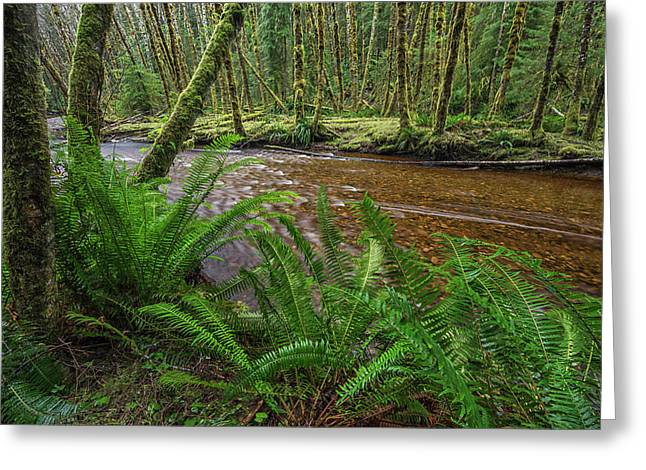 Haans Creek Flows Through The Green Greeting Card by Robert Postma