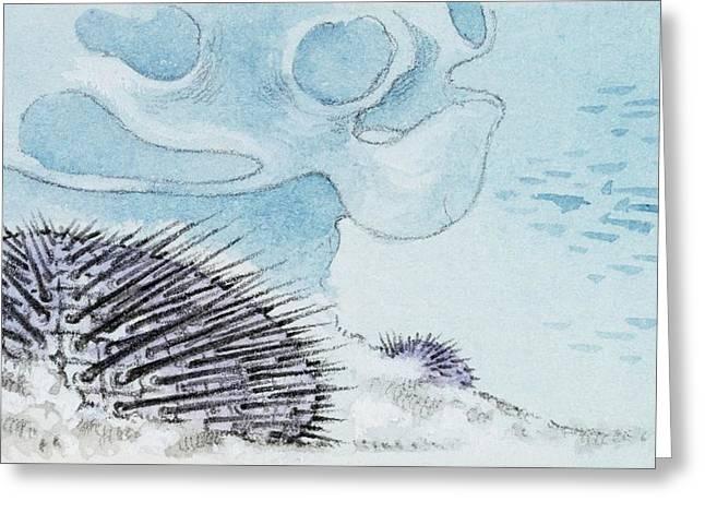 Habitat Of Micraster Greeting Card by Deagostini/uig