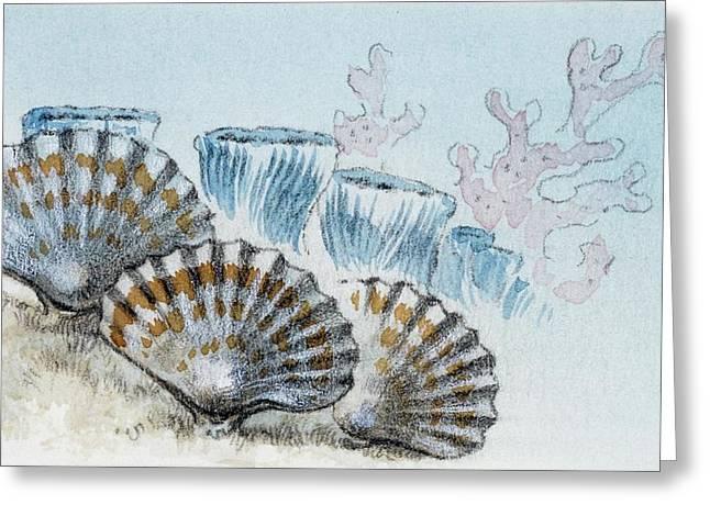 Habitat Of Rhynconella Greeting Card by Deagostini/uig