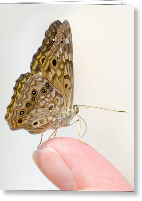 Hackberry Emperor On Finger Greeting Card