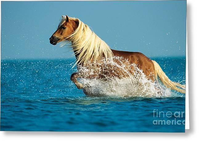 Haflinger Horse Greeting Card by Gabriele Boiselle