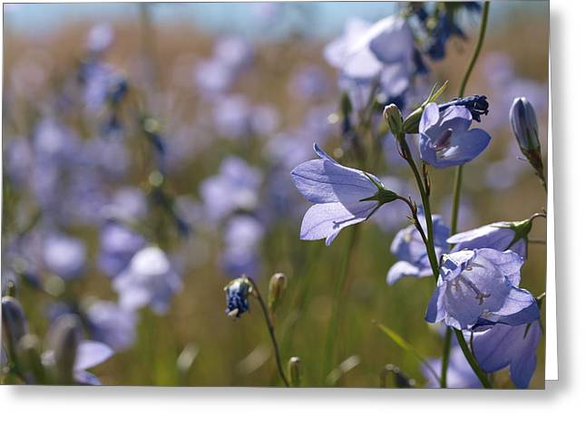 Harebells Greeting Card by Jenessa Rahn