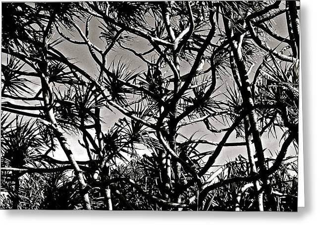 Hala Trees Greeting Card by Kim Pippinger
