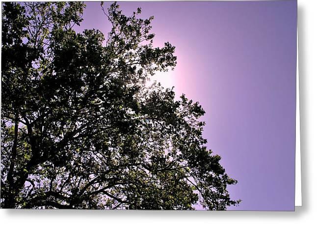 Half Tree Greeting Card by Matt Harang