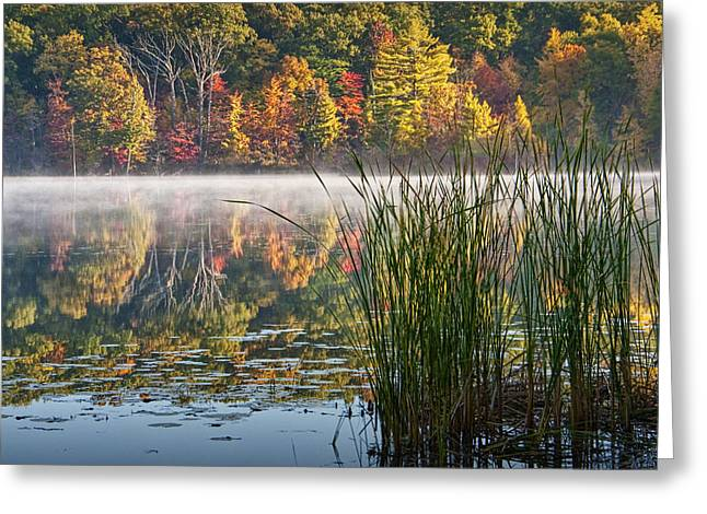 Hall Lake With Cattails In Autumn Greeting Card