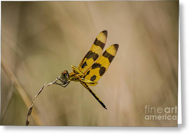 Halloween Pennant Dragonfly Greeting Card
