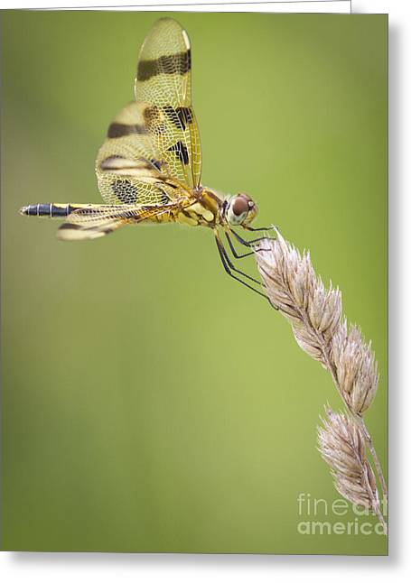 Halloween Pennant Greeting Card by Ricky L Jones