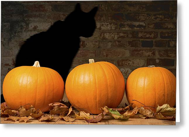 Halloween Pumpkins And The Witches Cat Greeting Card by Amanda Elwell