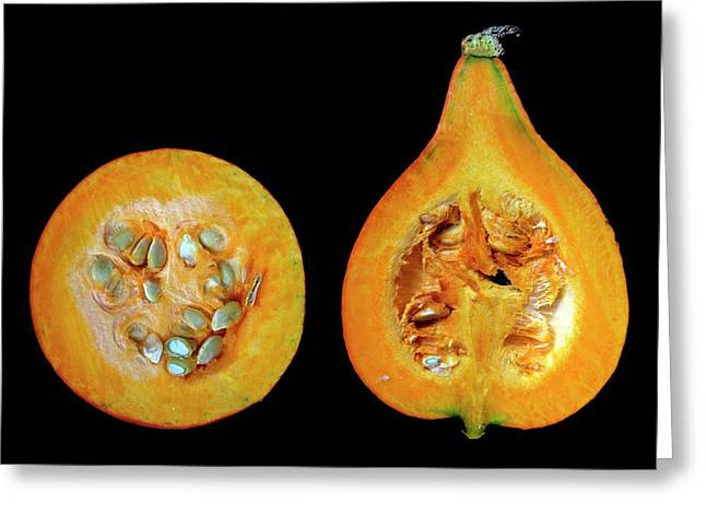 Halved Pumpkins Greeting Card by Thomas Fester