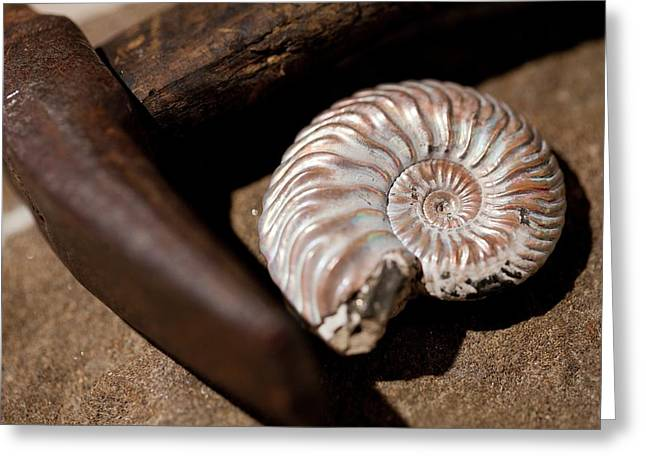 Hammer And Ammonite Geology Emblems Greeting Card by Paul D Stewart