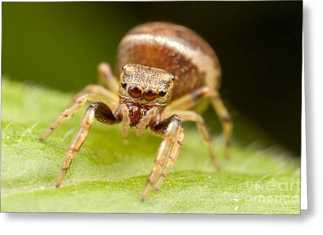 Hammerjawed Jumper I Greeting Card by Clarence Holmes
