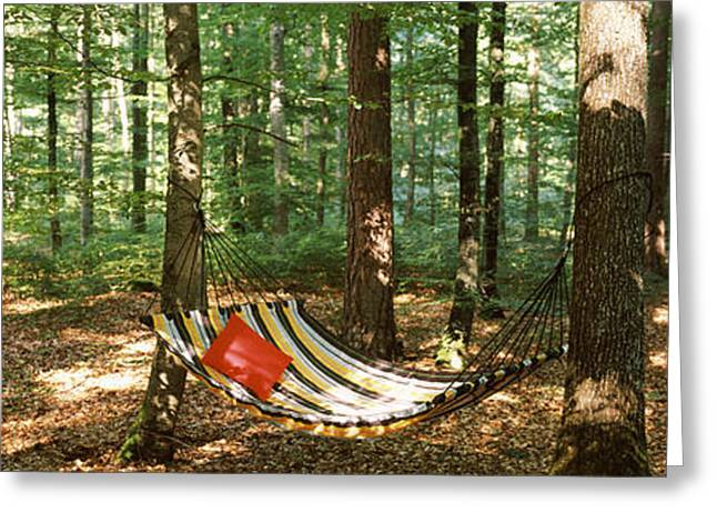 Hammock In A Forest, Baden-wurttemberg Greeting Card
