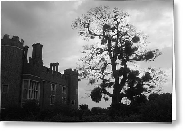 Hampton Court Tree Greeting Card