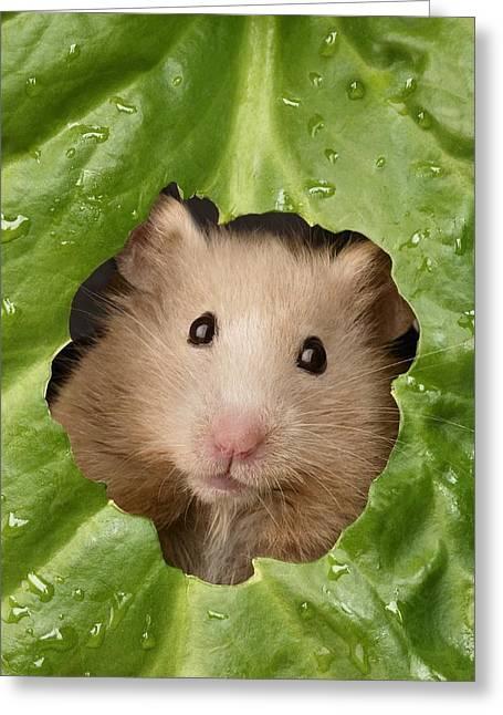 Hamster And Leaf Greeting Card by Greg Cuddiford