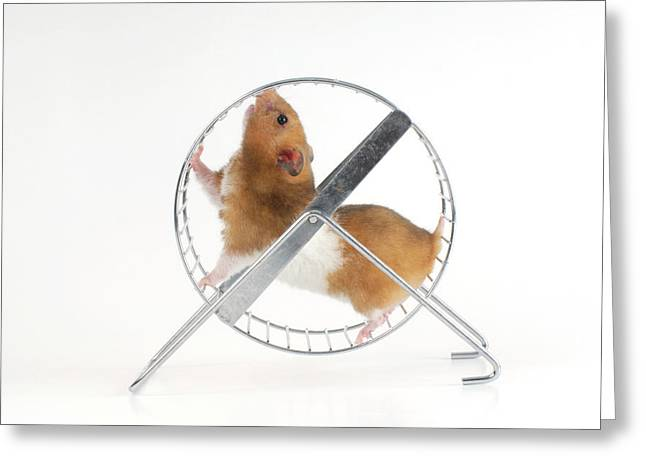 Hamster Greeting Card