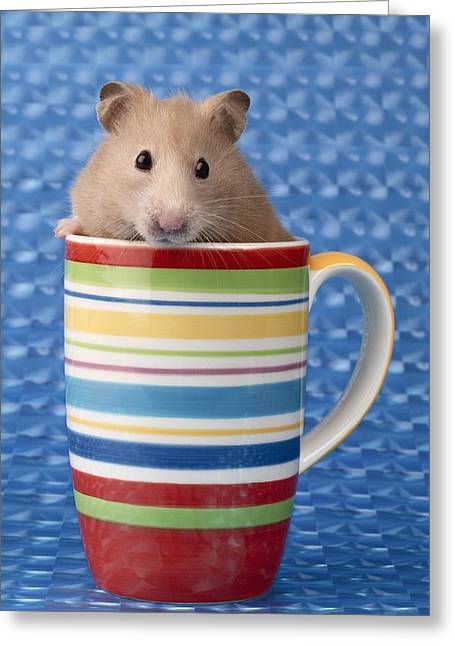 Hamster In Cup Greeting Card by Greg Cuddiford