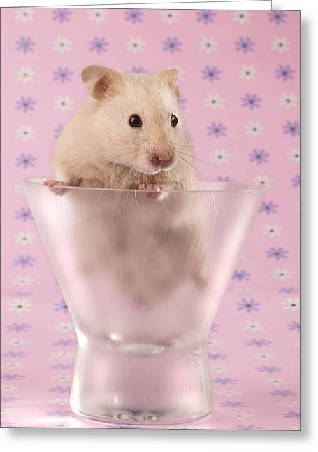 Hamster In Glass Greeting Card by Greg Cuddiford
