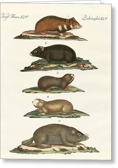 Hamsters And Field Voles Greeting Card by Splendid Art Prints