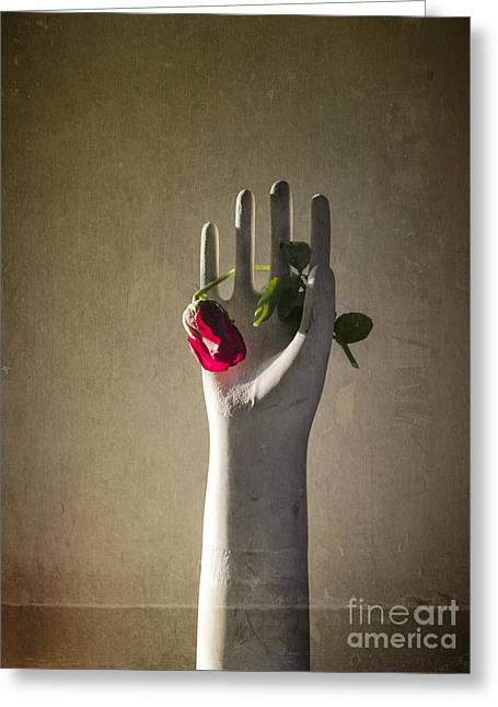 Hand Holding Rose Greeting Card by Terry Rowe