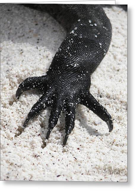 Hand Of A Marine Iguana Greeting Card