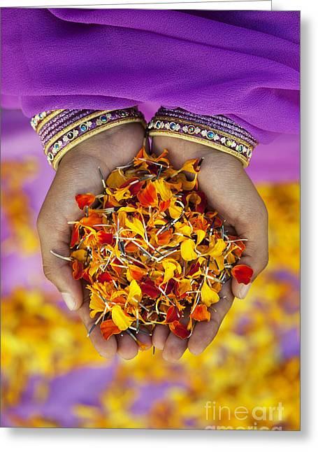 Hands Holding Flower Petals Greeting Card