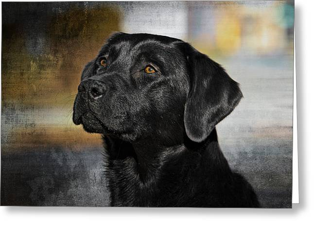 Greeting Card featuring the photograph Handsome Black Lab by Eleanor Abramson