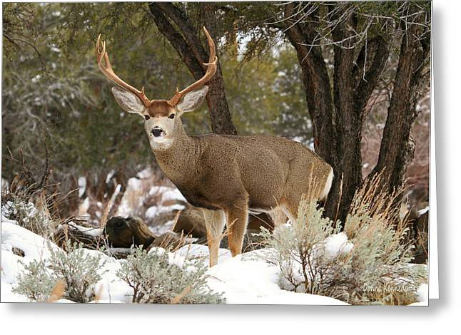 Handsome Buck Greeting Card by Donna Kennedy