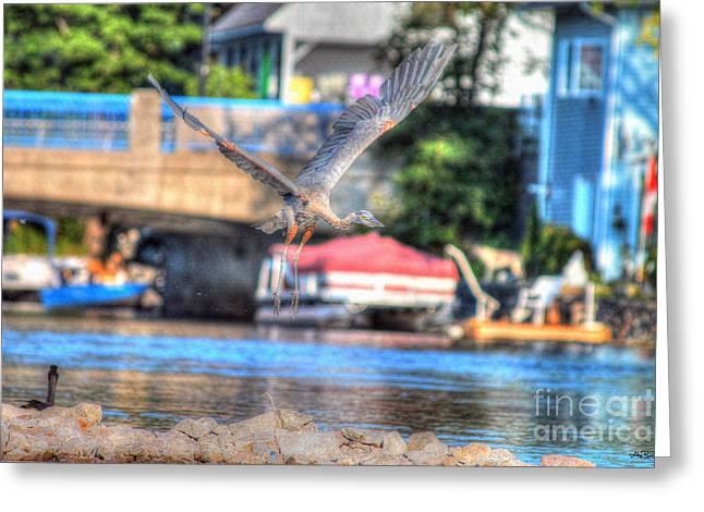 Hang-gliding Heron II Greeting Card