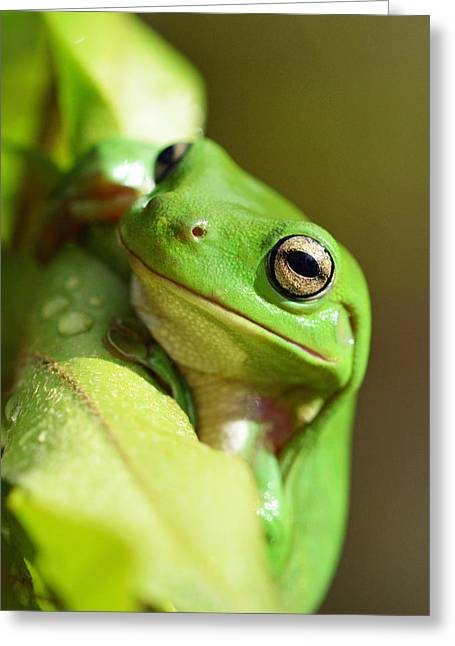 Hang In There Frog Greeting Card