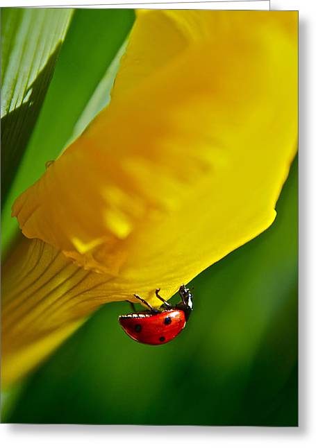 Hang On Greeting Card by Bill Owen