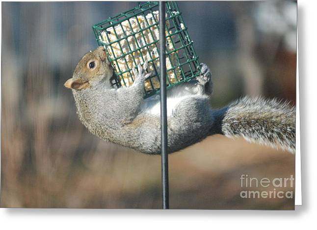 Greeting Card featuring the photograph Hangin Out by Mark McReynolds