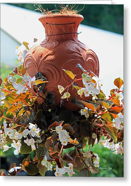Hanging Begonia Pot Greeting Card by Suzanne Gaff