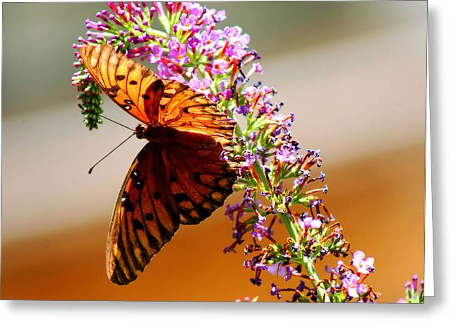 Hanging Butterfly Greeting Card