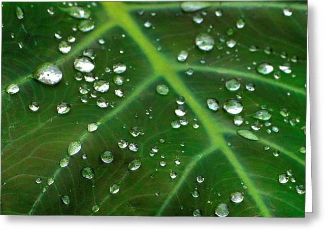 Hanging Droplets Greeting Card