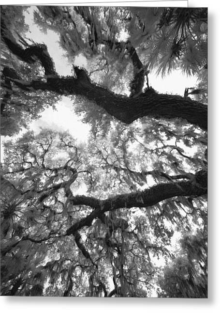 Hanging Moss Greeting Card by Bradley R Youngberg