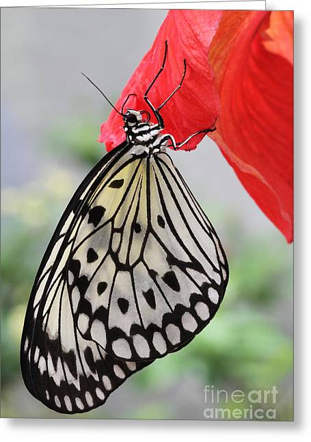 Greeting Card featuring the photograph Hanging On #2 by Judy Whitton