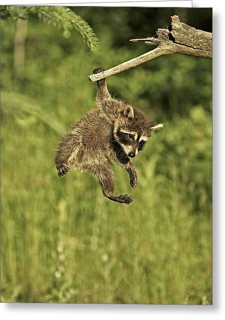 Hanging Out Greeting Card by Jack Milchanowski