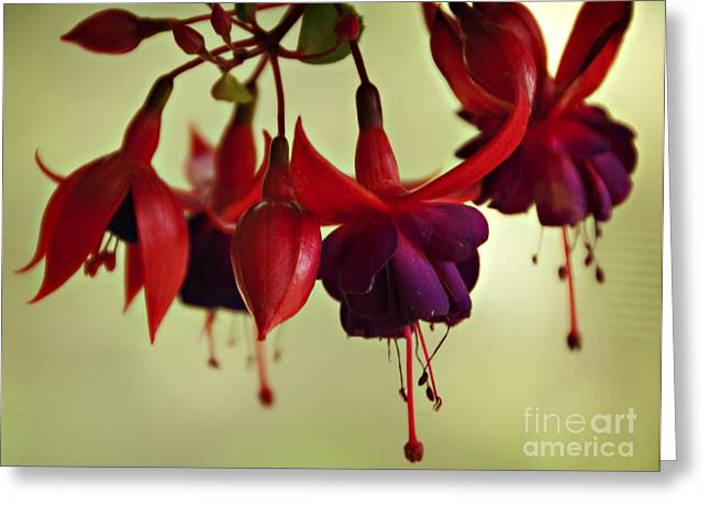 Hanging Plant Greeting Card by Nancy E Stein