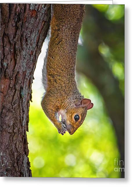 Hanging Squirrel Greeting Card by Stephanie Hayes