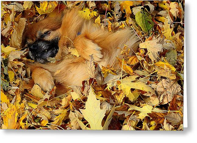 Happiness Is A Fresh Pile Of Leaves Greeting Card by Joe Wicks