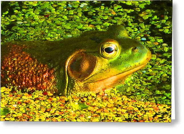 Happy As A Frog In A Pond Greeting Card