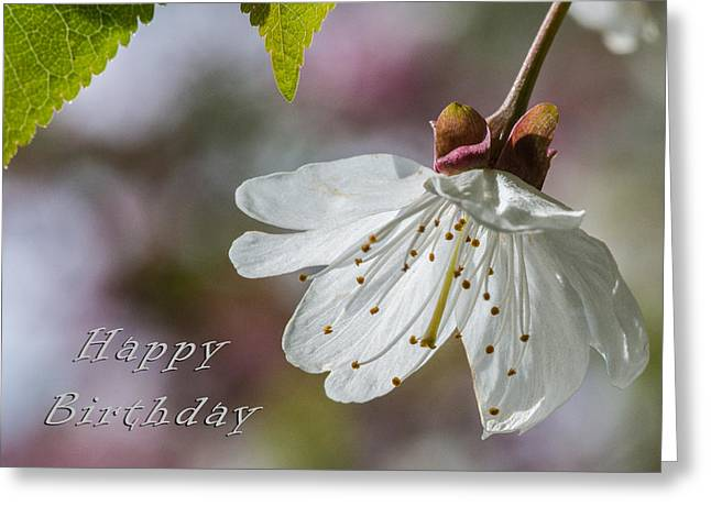 Happy Birthday Blossom Greeting Card by Michele Wright