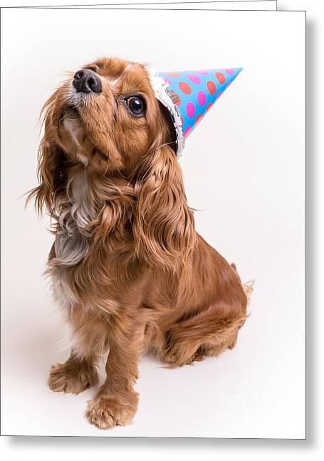 Happy Birthday Dog Greeting Card by Edward Fielding