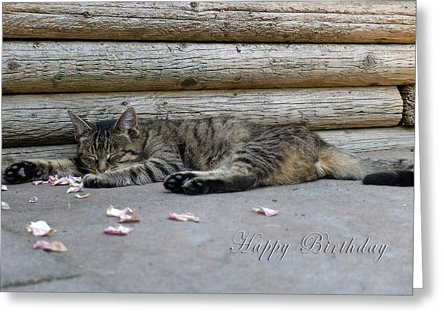 Happy Birthday Sleeping Cat Greeting Card by Michele Wright