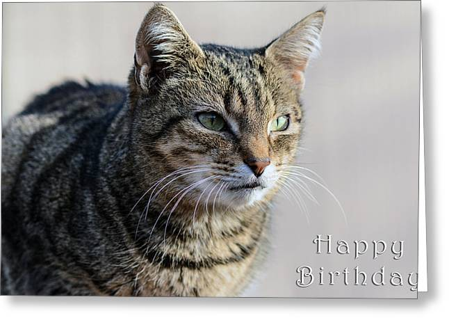 Happy Birthday Tabby Greeting Card by Michele Wright