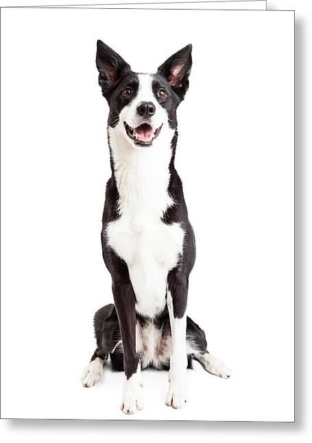 Happy Border Collie Mix Breed Dog Sitting Greeting Card by Susan Schmitz