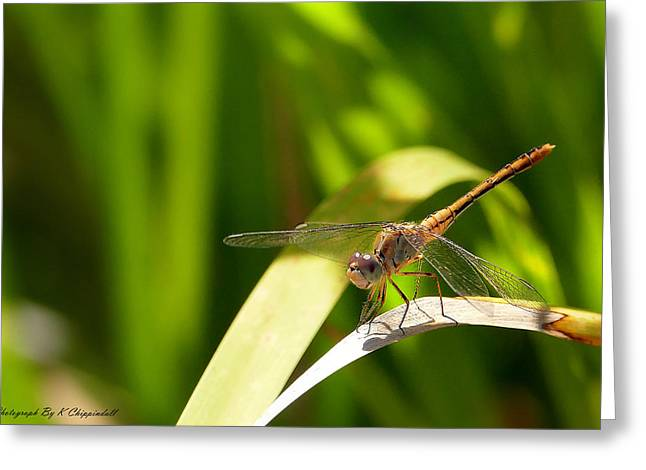 Happy Dragonfly 01 Greeting Card by Kevin Chippindall