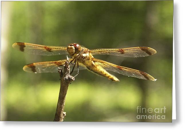 Happy Dragonfly Greeting Card by Patrick Fennell