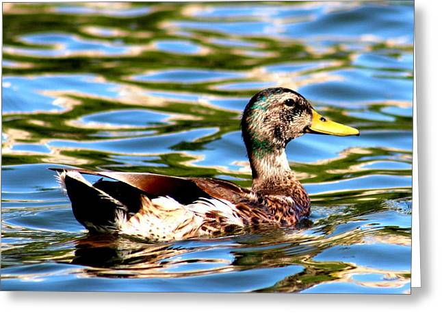 Happy Duck Greeting Card