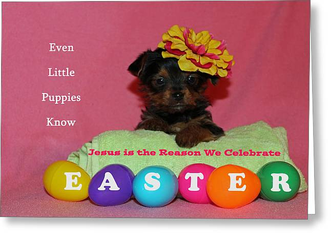 Happy Easter Greeting Card by Lorna Rogers Photography